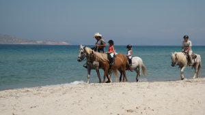 horses-1265713_1920