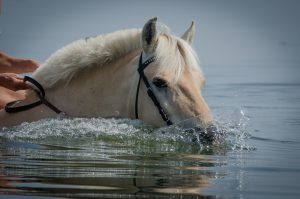 horse-1860301_1280
