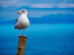 seagull-1900657_1280